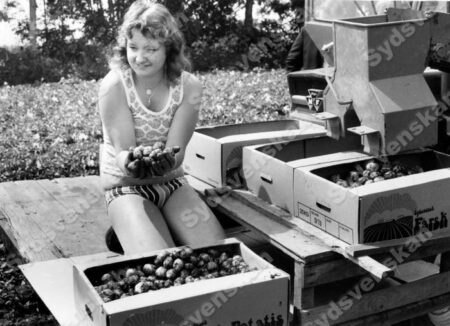 1978 arkiv Sida 97 av 141 Bilder i syd